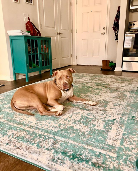 Pet Friendly Rug, Best Rugs For Living Room With Dogs